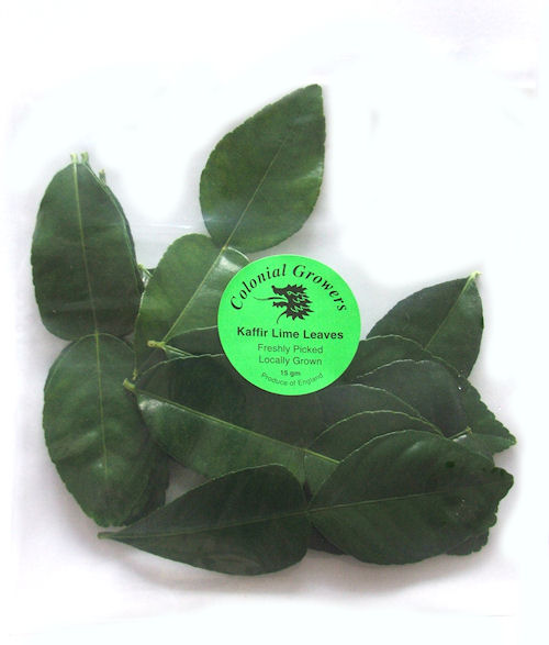 kaffir lime leaves plants retail wholesale