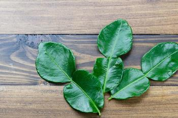 Fresh kaffir lime leaves for UK and Europe