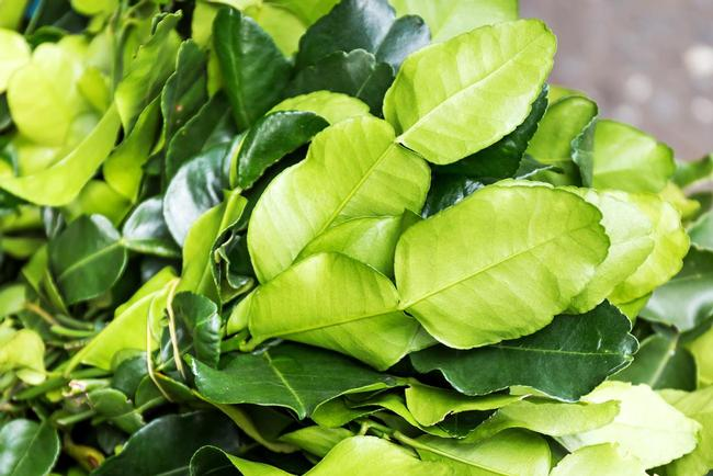 Fresh kaffir lime leaves by colonial growers. We also supply kaffir limes.